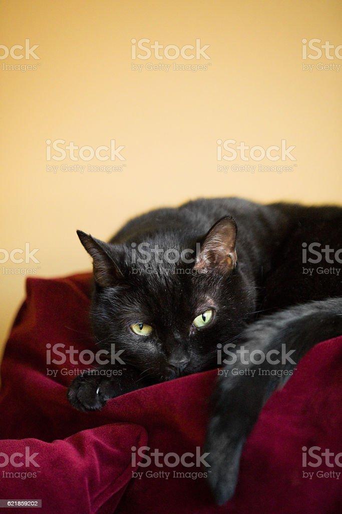 Sleepy Cat stock photo