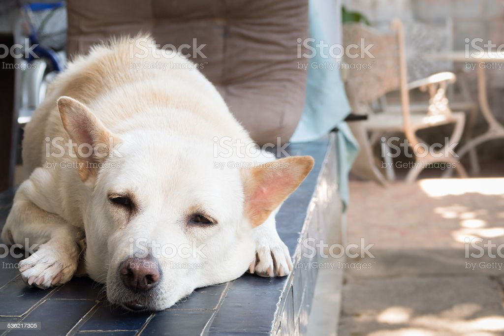 sleepy dog stock photo
