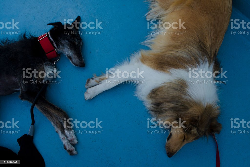 Sleepy dogs stock photo