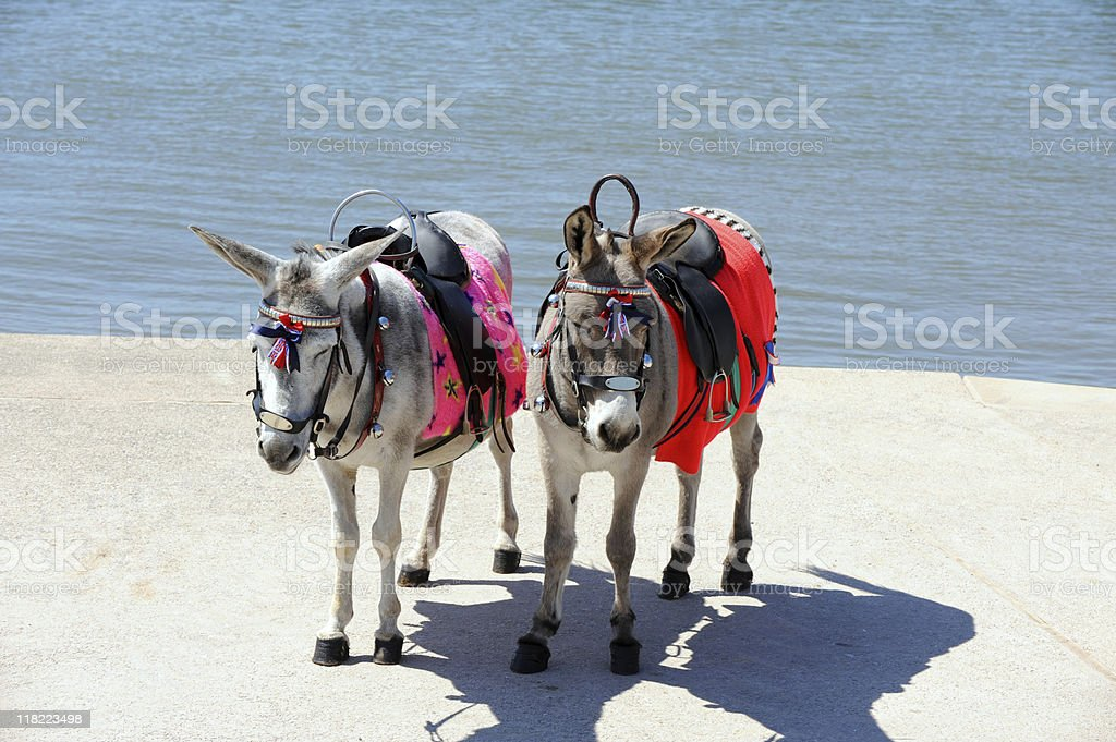 Sleepy Donkeys stock photo
