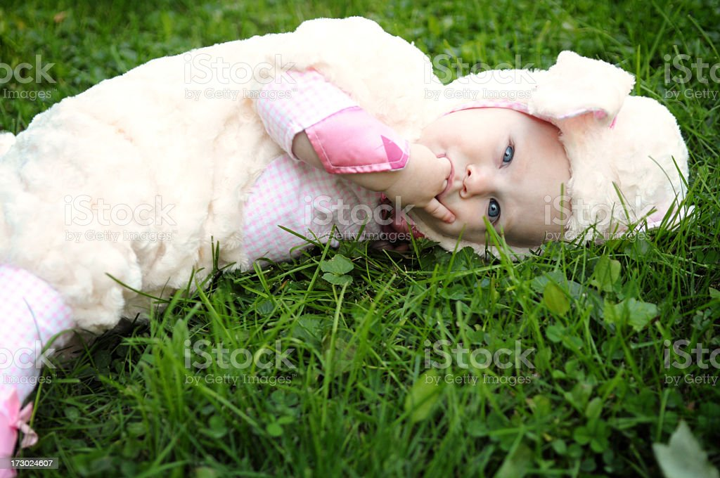 Sleepy Little Lamb royalty-free stock photo
