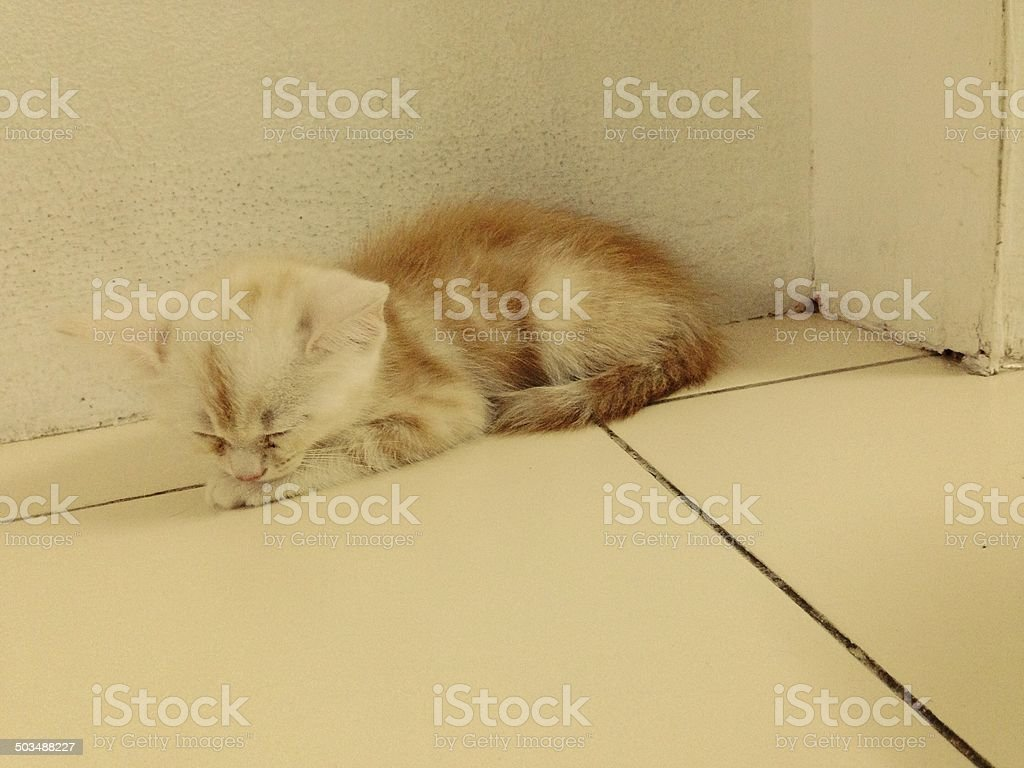 sleepy stock photo