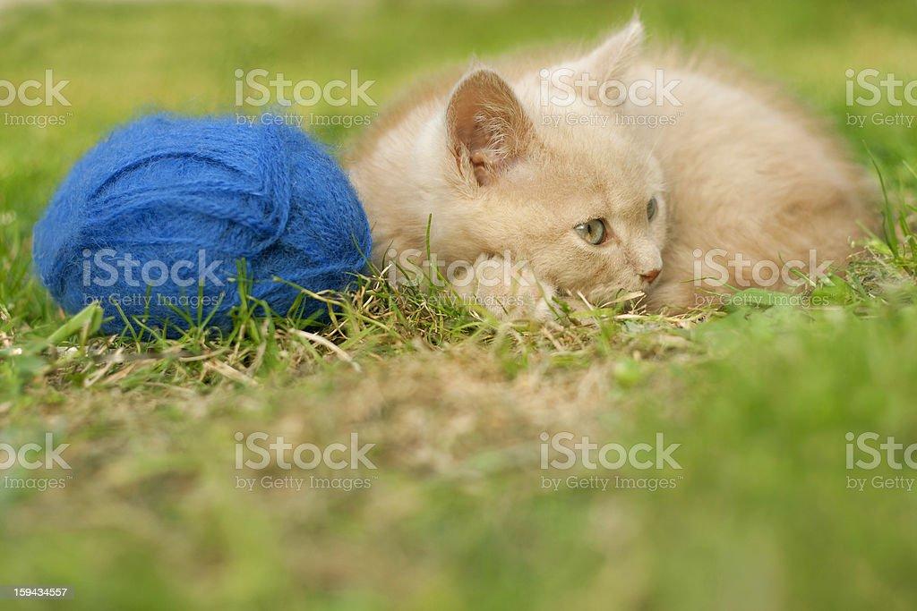 sleepy pussycat royalty-free stock photo