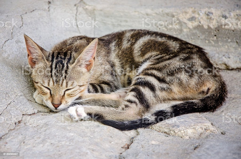 Sleepy tabby cat stock photo