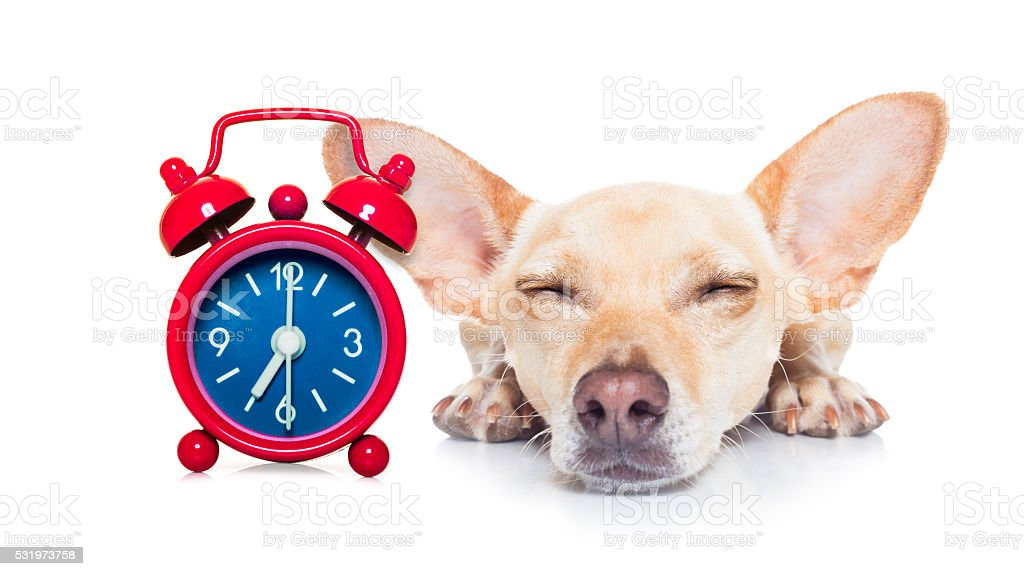 sleepyhead dog stock photo