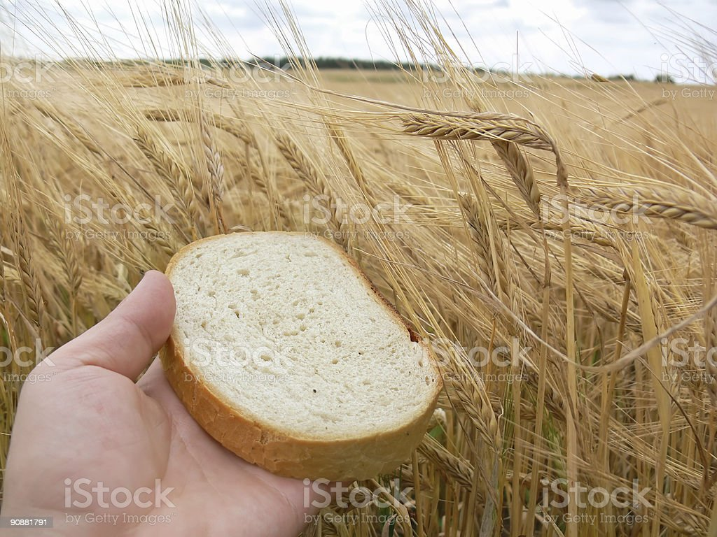 Slice bread and wheat royalty-free stock photo