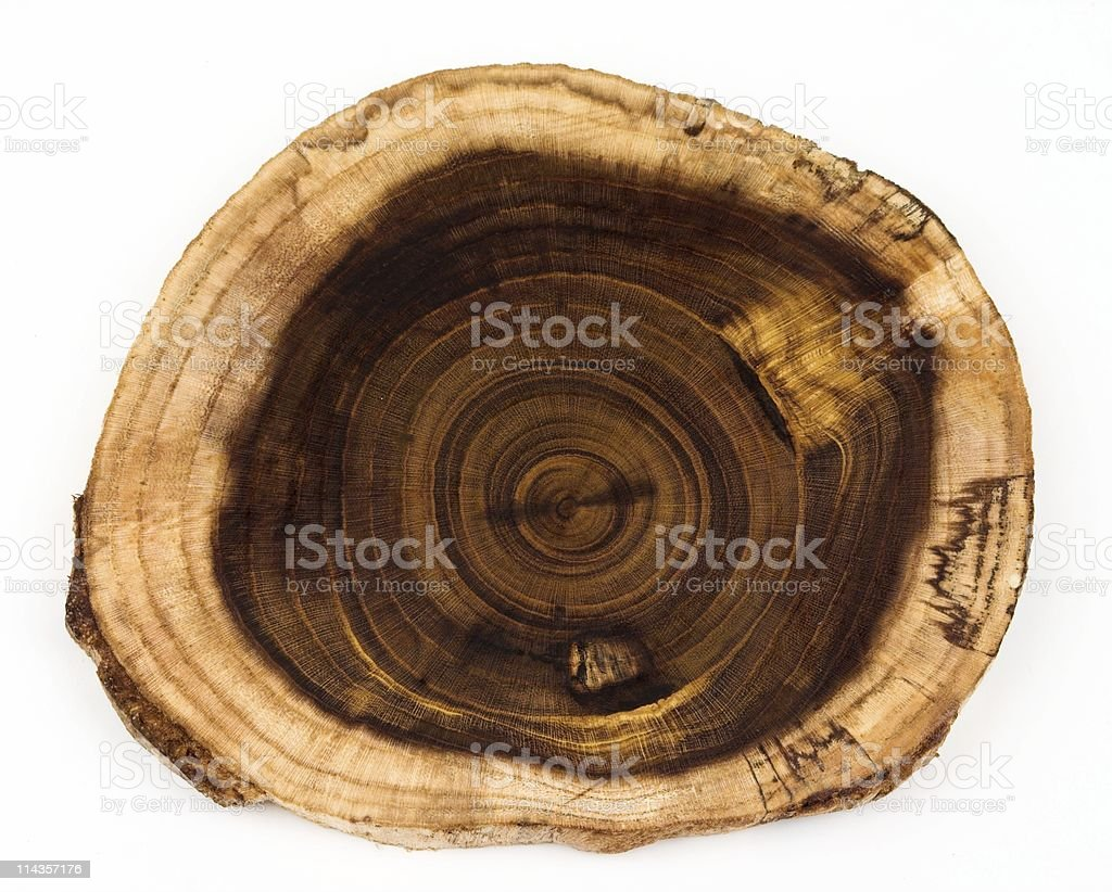 Slice From Laburnum Log Showing Concentric Growth Rings stock photo