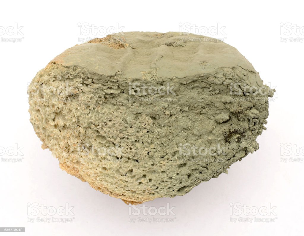 slice of bread covered with mold stock photo