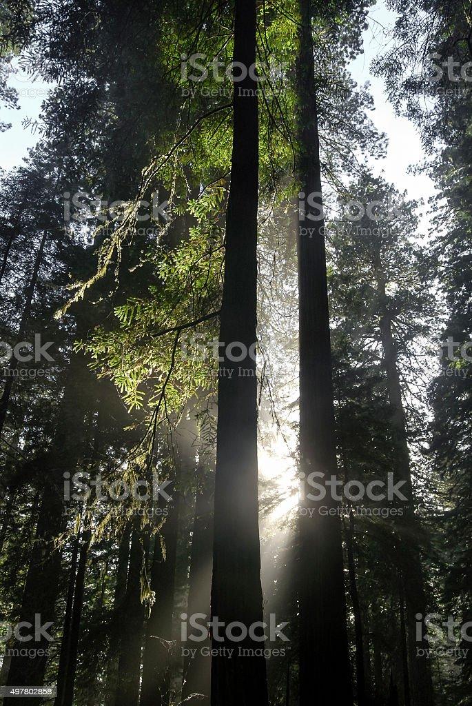 Slice of Light stock photo