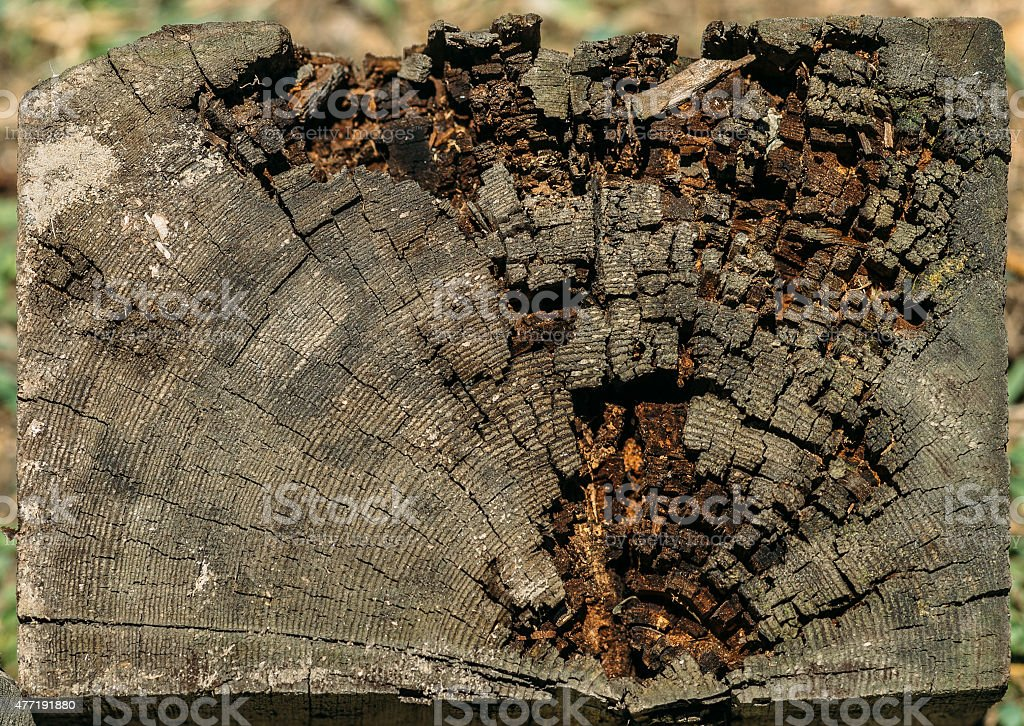 slice of old logs stock photo