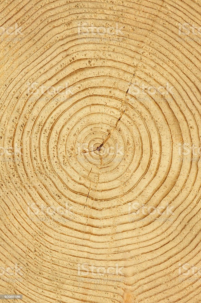 slice of wood timber natural background royalty-free stock photo