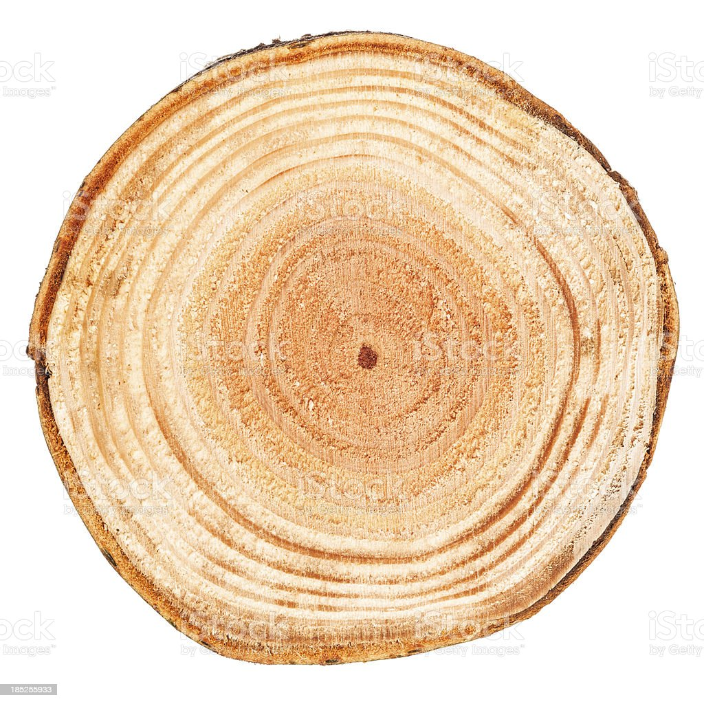 Slice through a tree showing tree rings stock photo