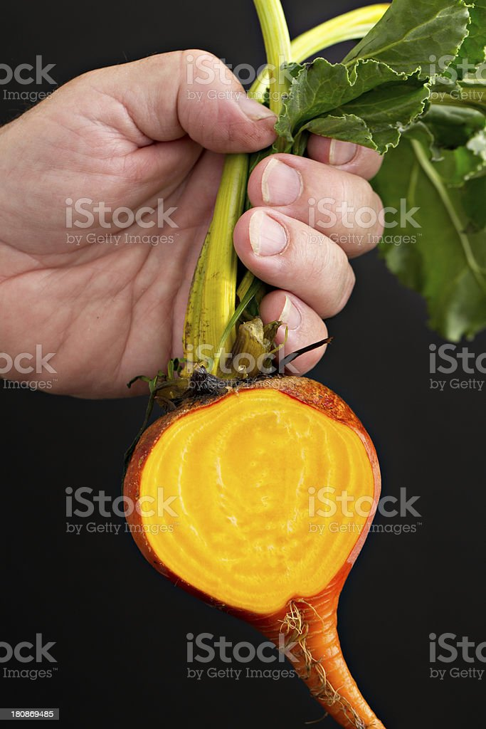 Sliced Golden Beet royalty-free stock photo