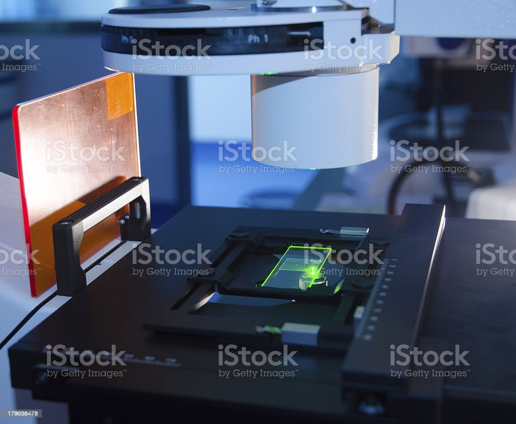slide under fluorescent microscope royalty-free stock photo