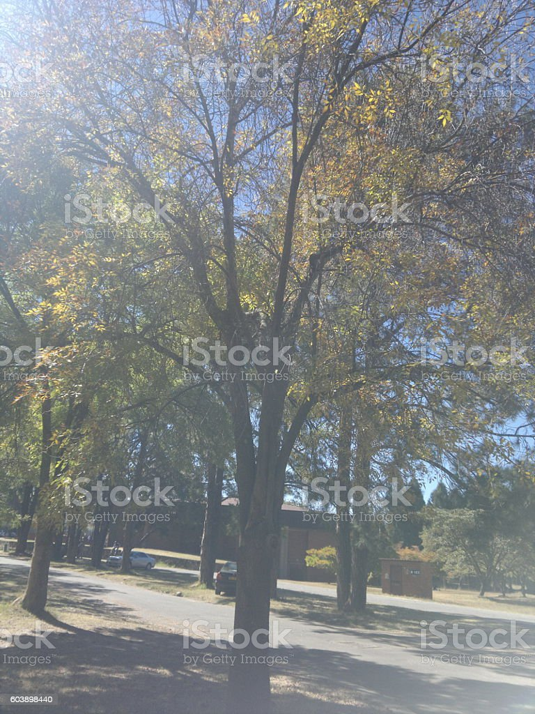 Slight rarefaction of light upon a tree royalty-free stock photo