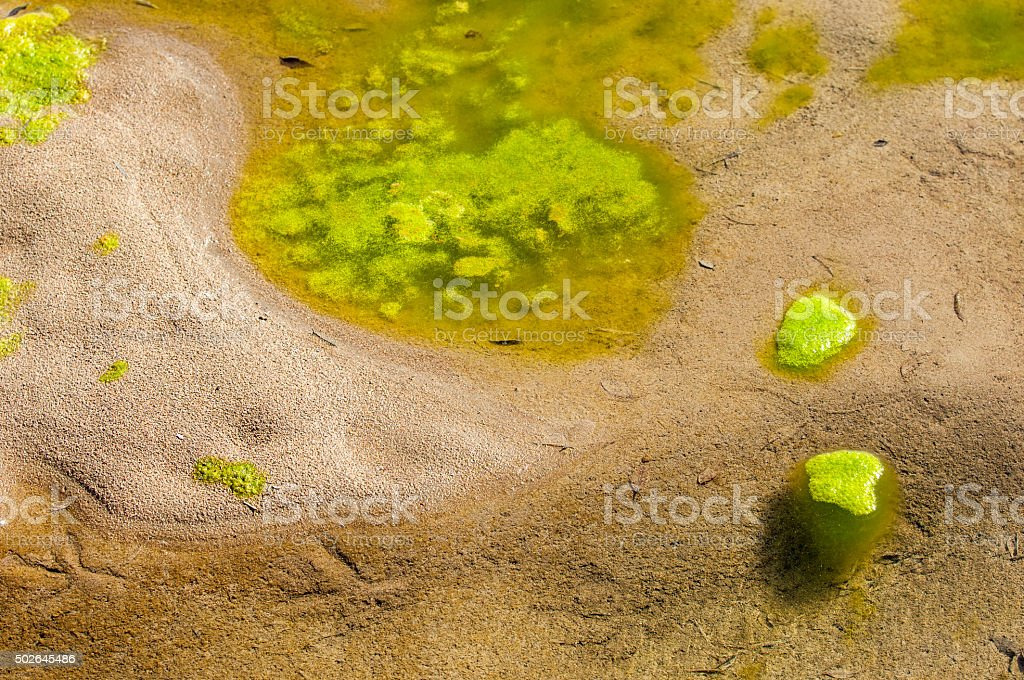 slime water stock photo