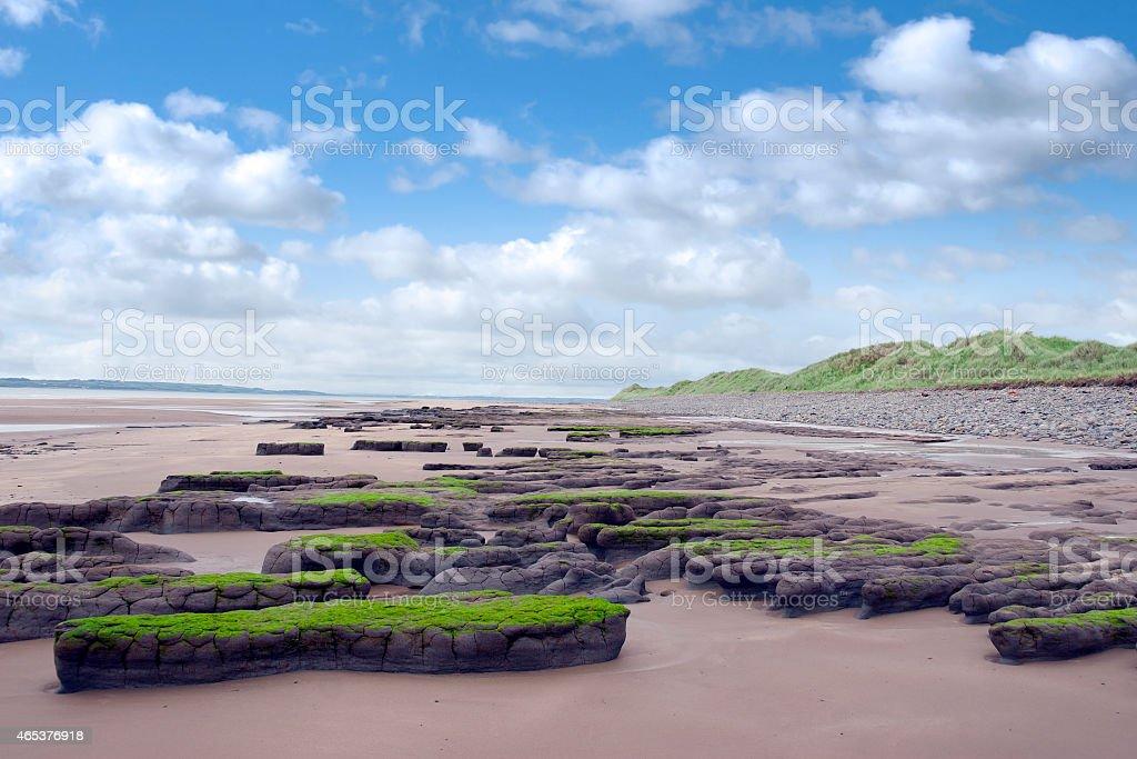 slimey green mud banks at Beal beach stock photo