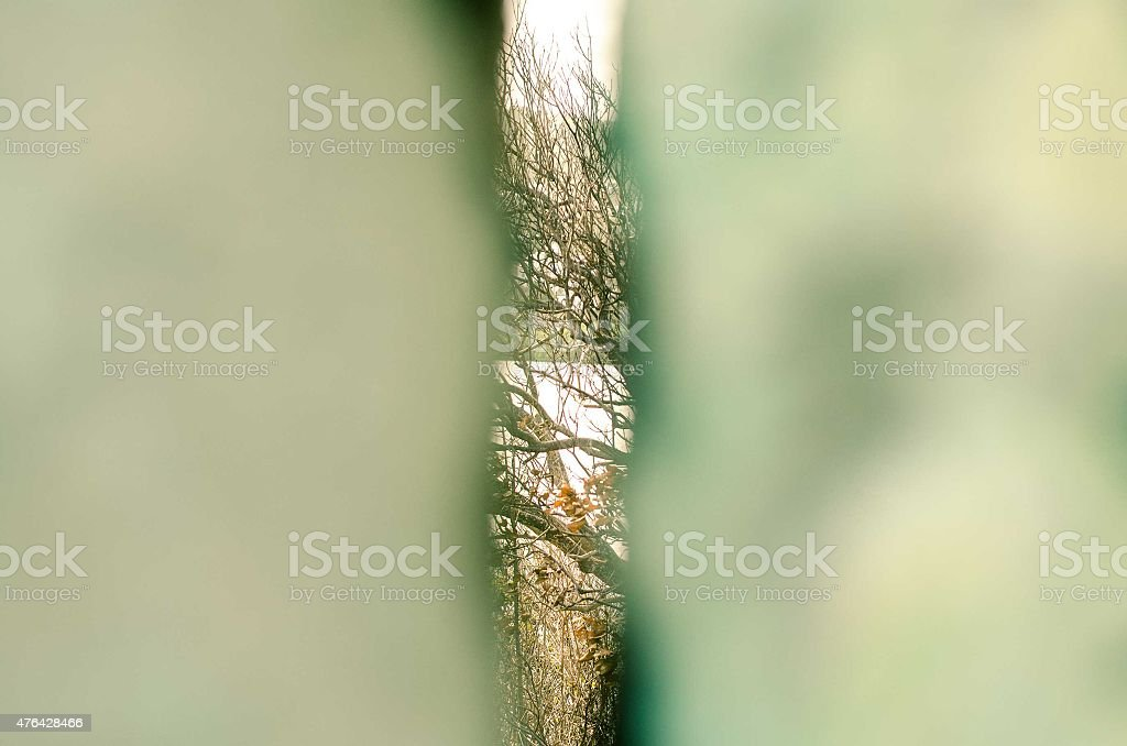slit showing wooded area abstract stock photo