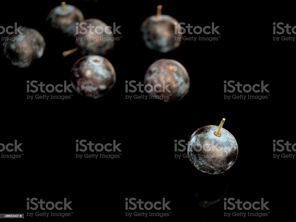 Sloe,Prunus spinosa - blackthorn on a black background stock photo