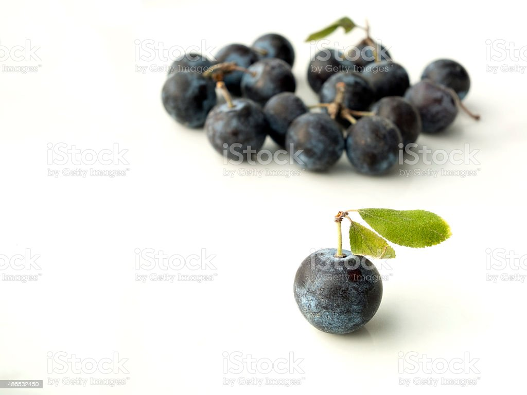 Sloe,Prunus spinosa - blackthorn on a white background stock photo