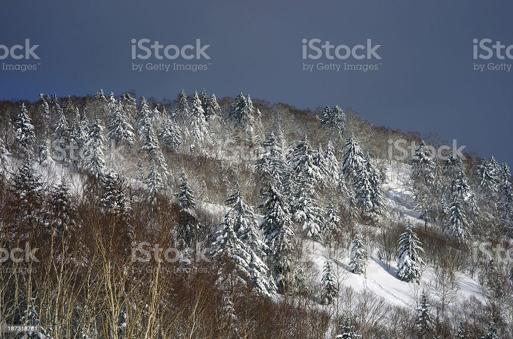 Slope mountain trees royalty-free stock photo