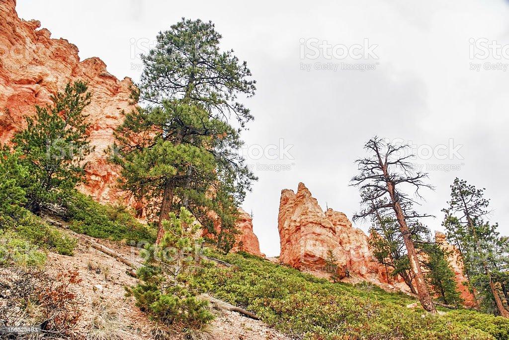 Slopes of Bryce Canyon royalty-free stock photo