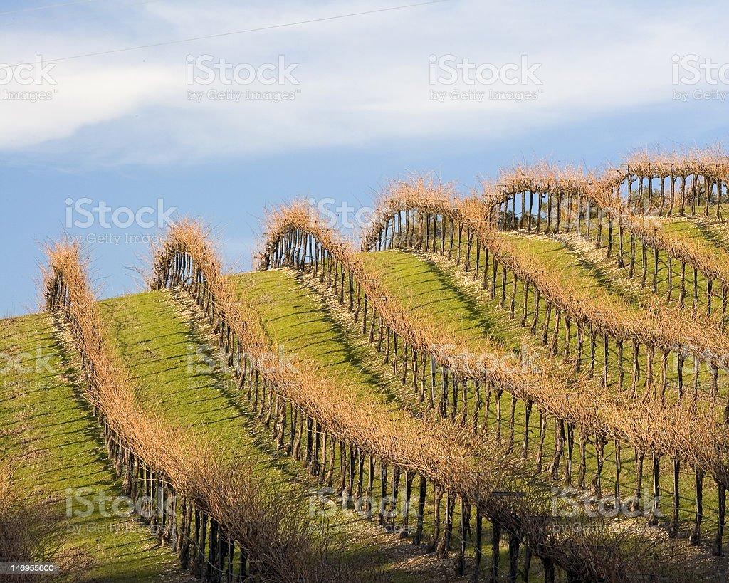 Inclinación hacia Vineyard en una caída Sky foto de stock libre de derechos