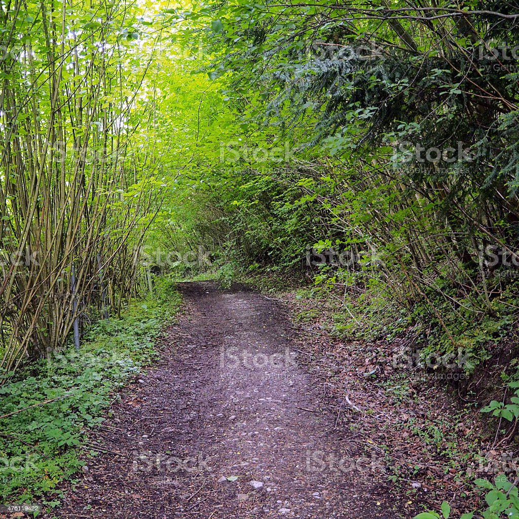 Slopy forest stock photo