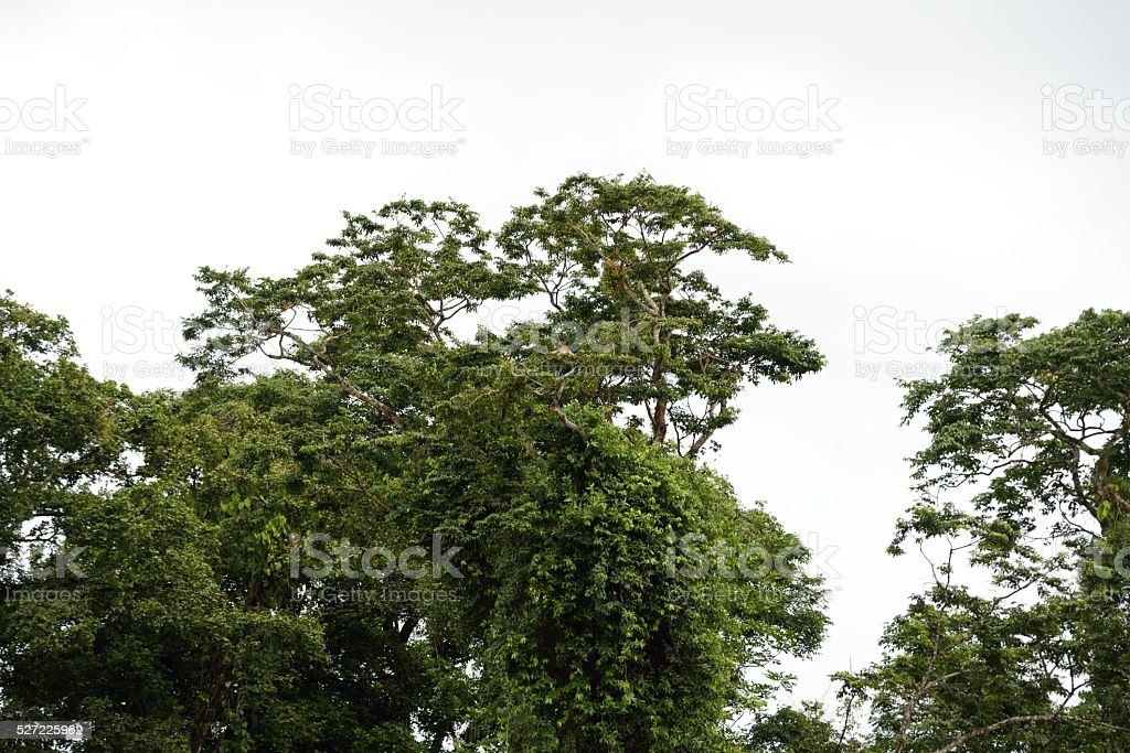 Sloth relaxing in the Rainforest in Costa Rica stock photo