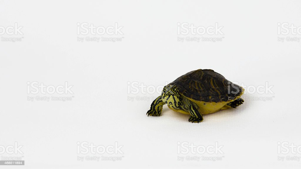 Slow but steady stock photo