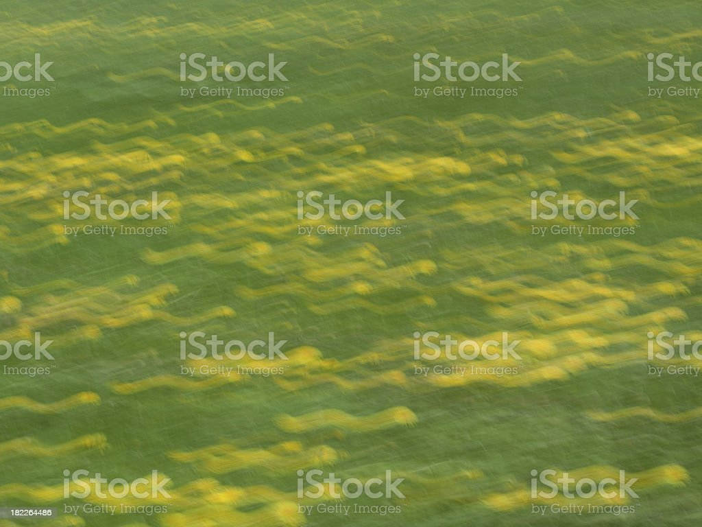 Slow shutter speed on green grass and dandelions royalty-free stock photo