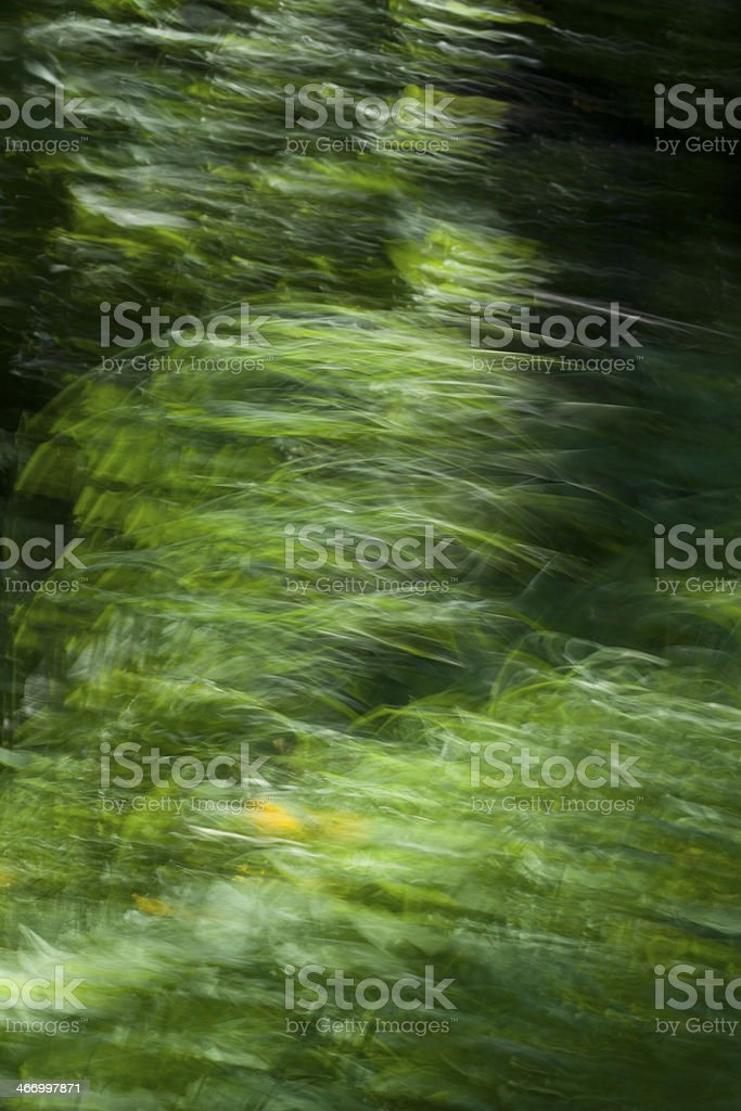 Slow shutter speed on green grass royalty-free stock photo
