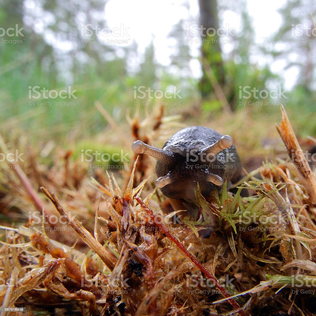 slug stock photo