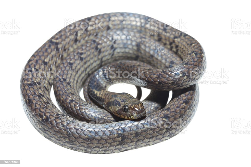 Slug snake on white background stock photo