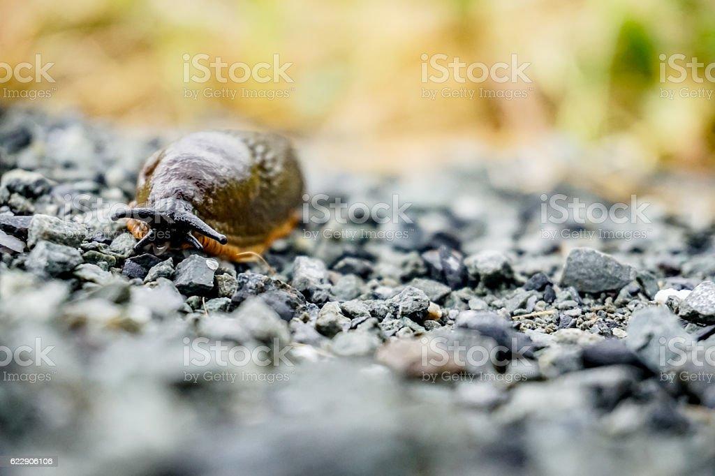 Slugging along stock photo