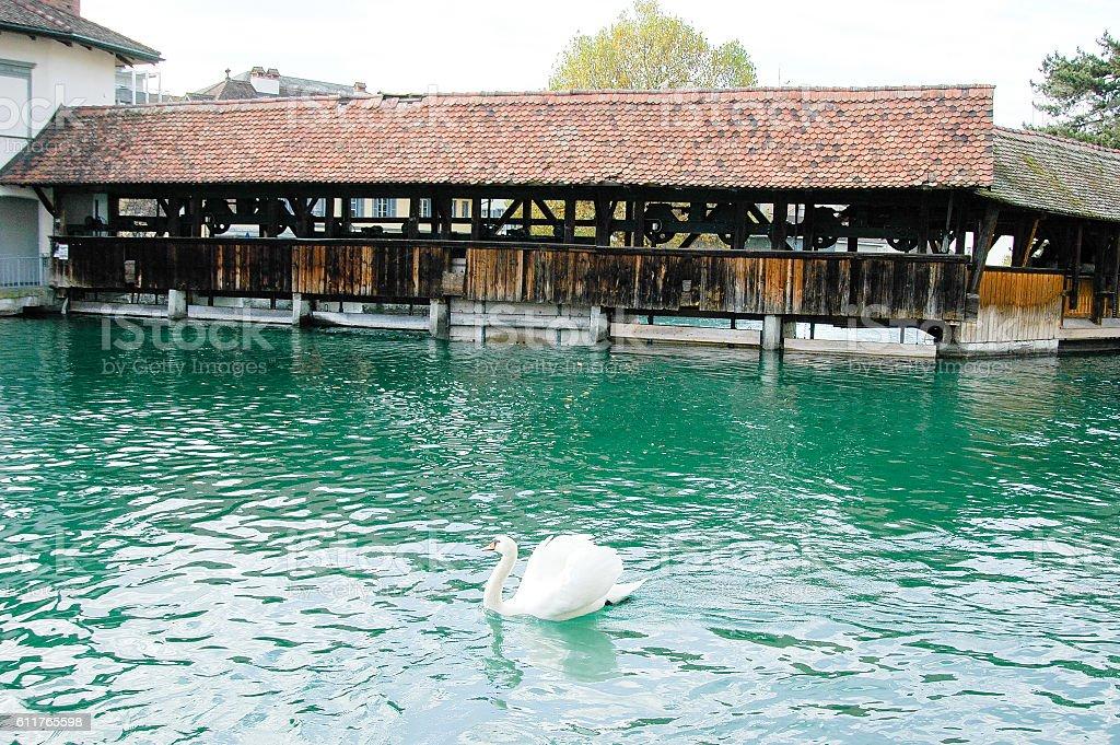 Sluice Bridge and Swan in Lakeside Town Thun, Switzerland stock photo