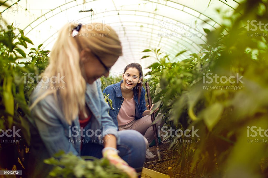 Small agricultural holding stock photo