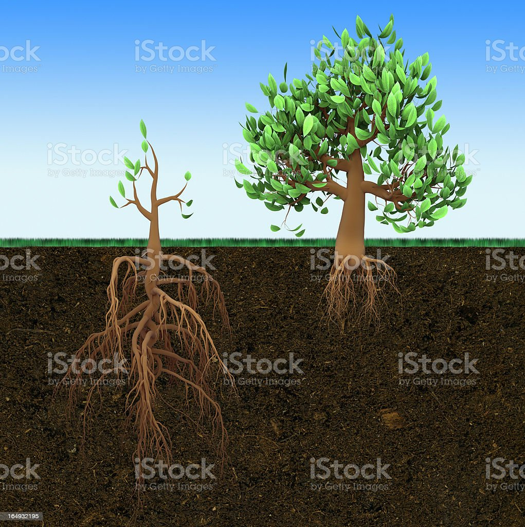 Small and big trees royalty-free stock photo