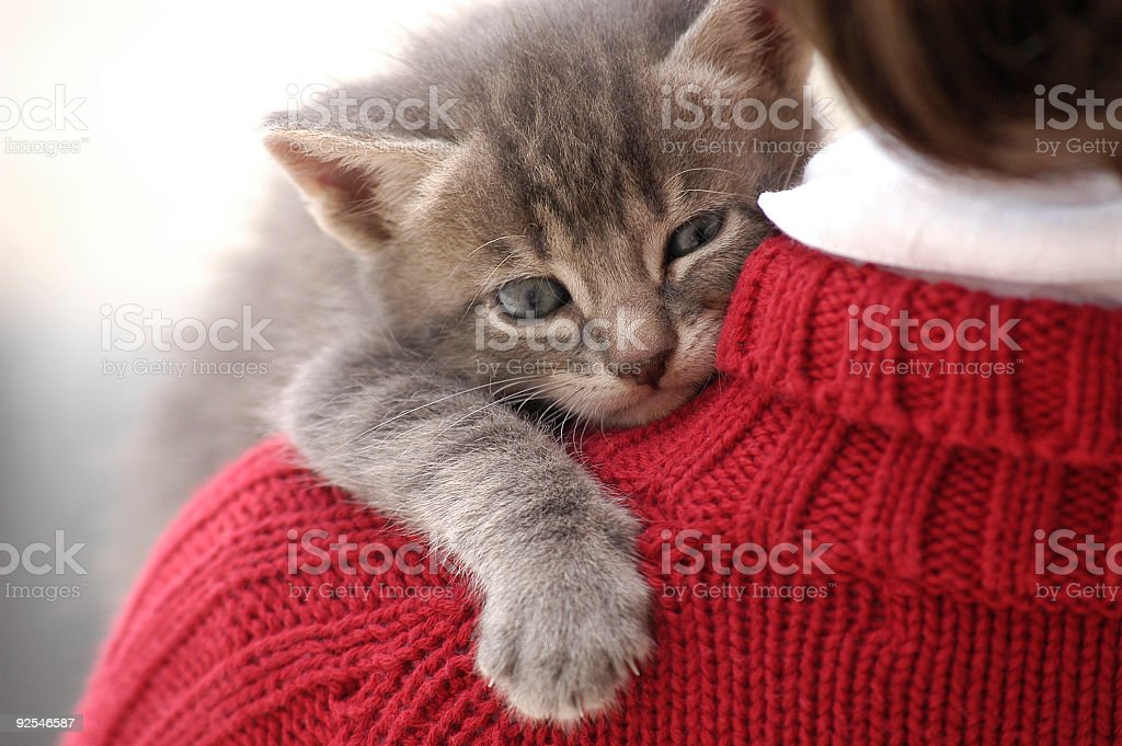 Small and cute kitten on little girl shoulder stock photo