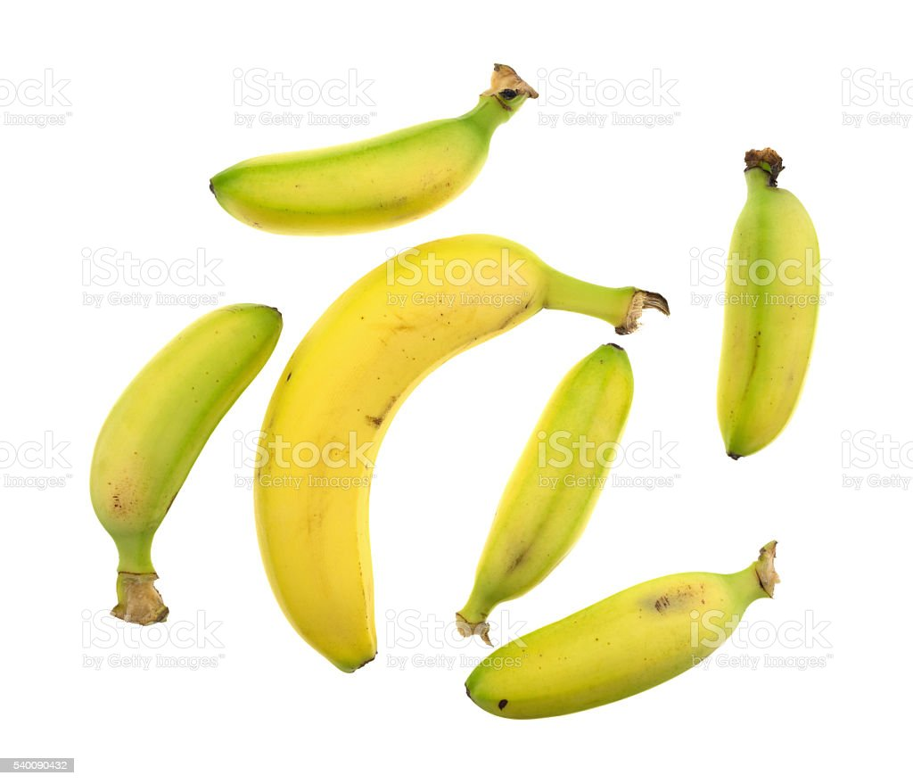 Small and large bananas on a white background stock photo