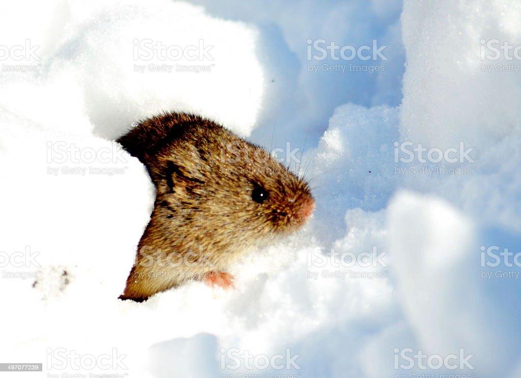 Small animals stock photo