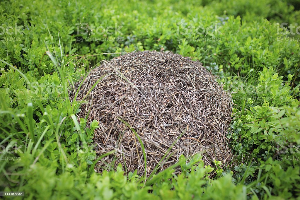 Small Anthill royalty-free stock photo
