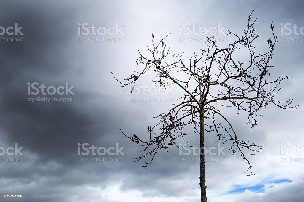Small bare tree against dark clouds royalty-free stock photo