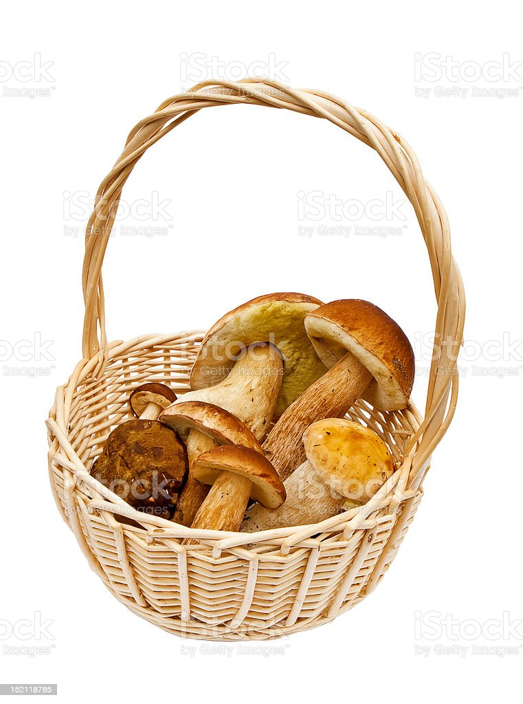 Small basket with mushrooms royalty-free stock photo