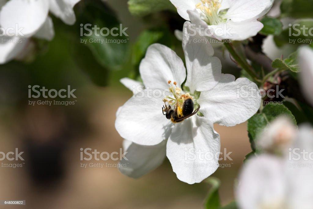 small bee stock photo
