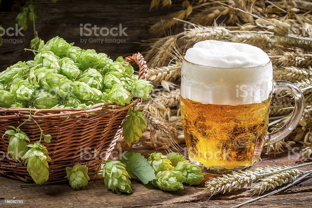Small beer with a large foam surrounded by hops royalty-free stock photo