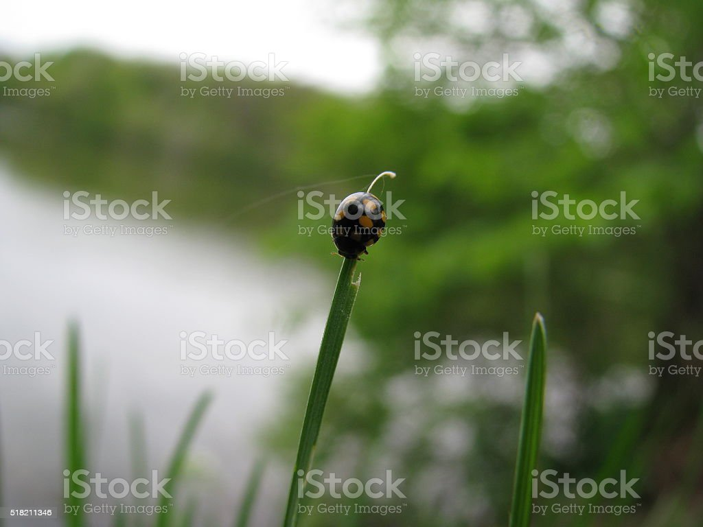 small beetle on the grass stock photo