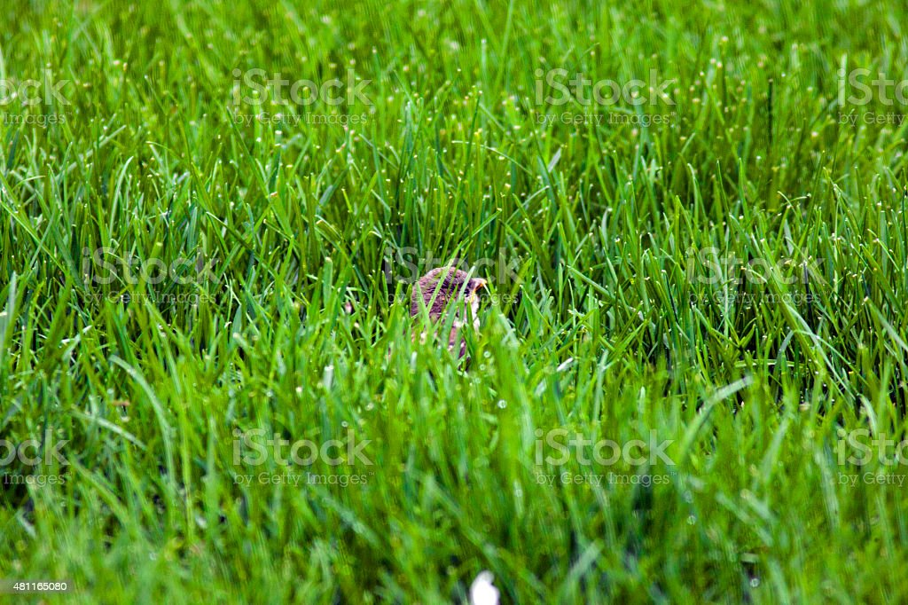 Small Bird In Grass stock photo