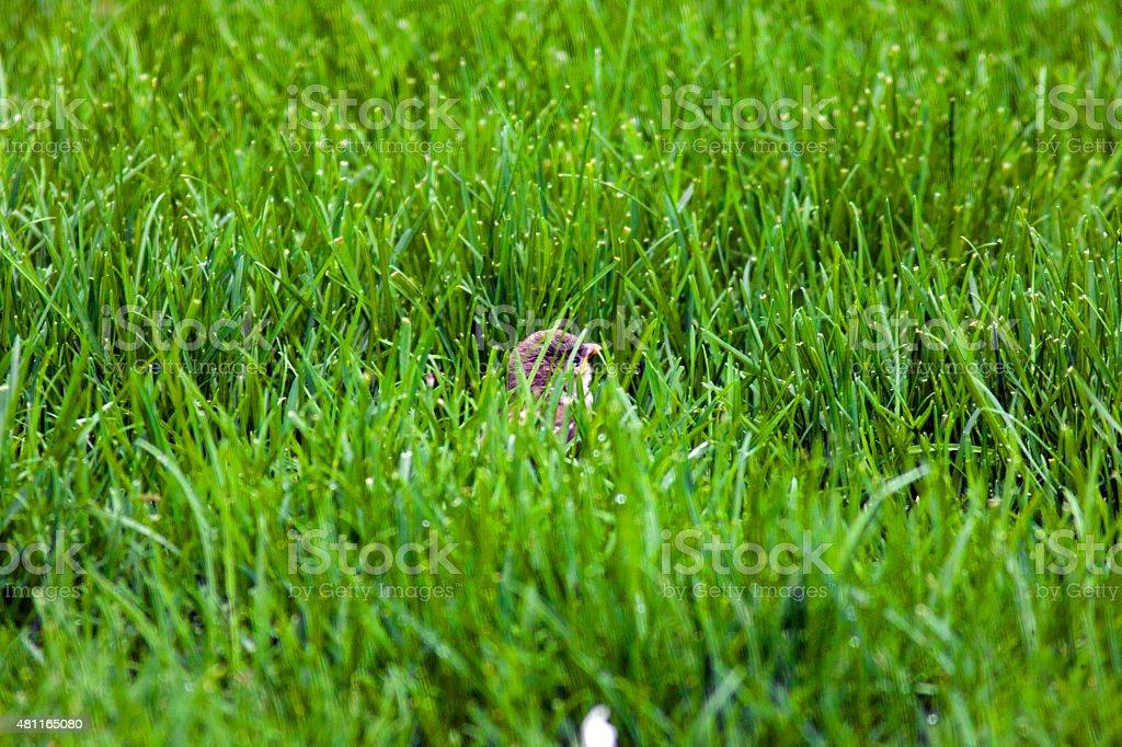 Small Bird In Grass stock photo