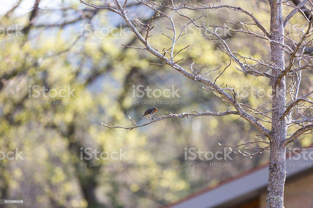 Small bird in tree stock photo